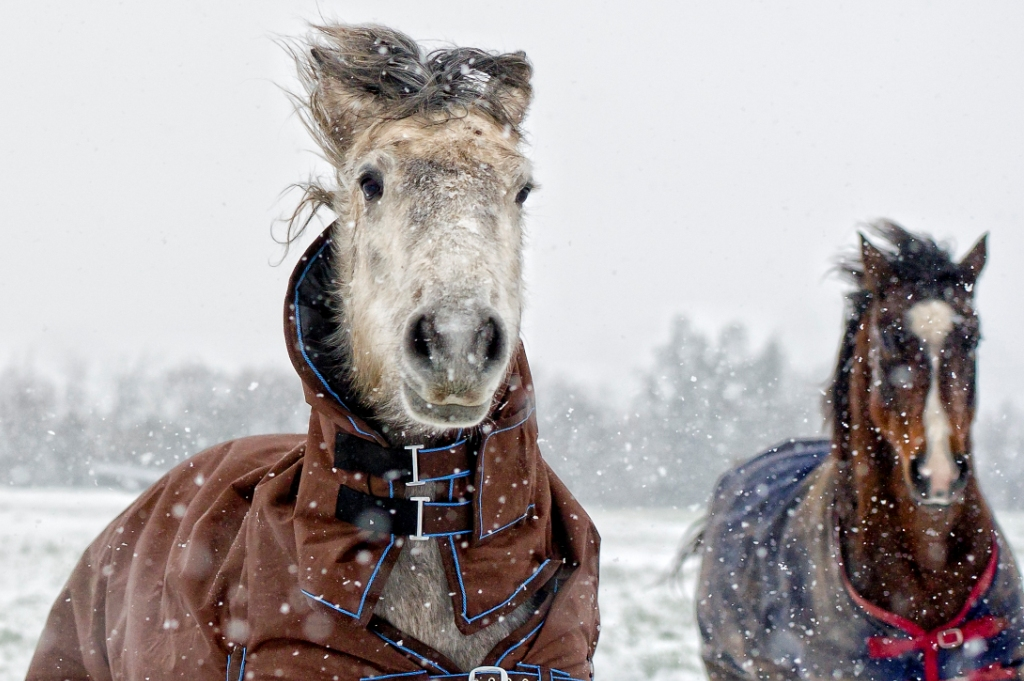 Caring for your horse in winter