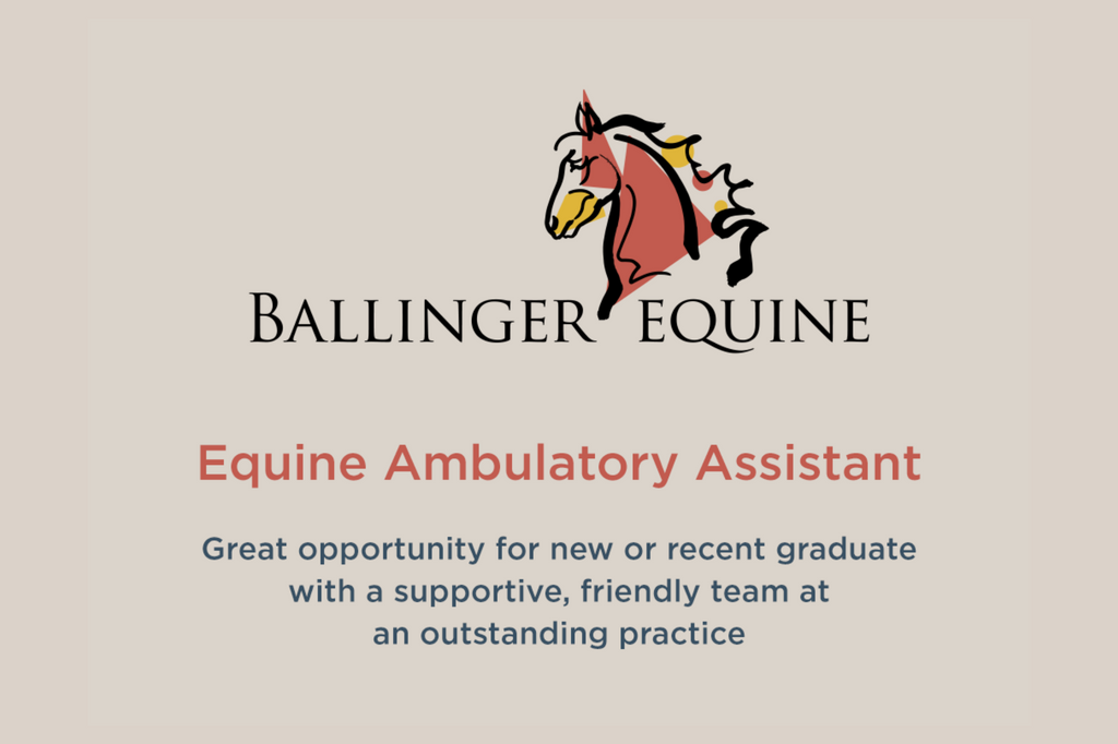 ballinger equine recruitment 2